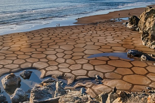 An image of Andres Amador's art work Cells III. It features organic, geometric shapes drawn across a beach.